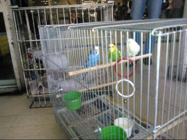 Animais são recolhidos de pet shop após denúncia de maus-tratos