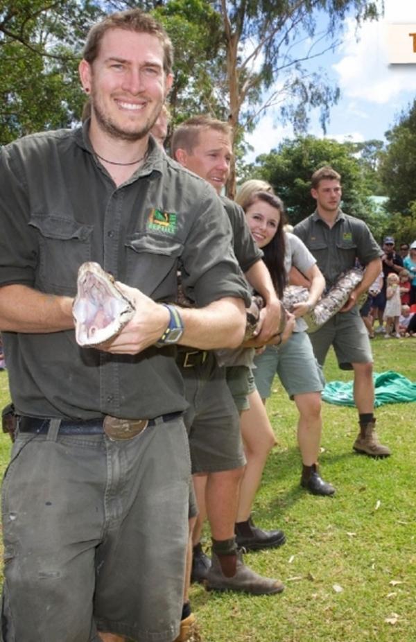 Cobra de 6,5 metros engorda 1 kg após pesagem na Austrália
