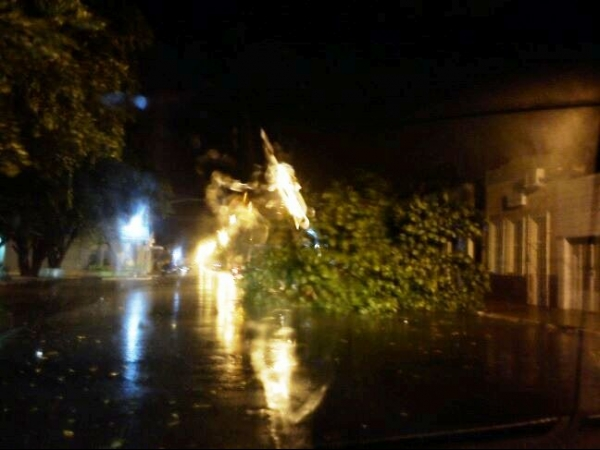 Vendaval derruba árvores, destelha casas e teto do mercado público de Campo Maior