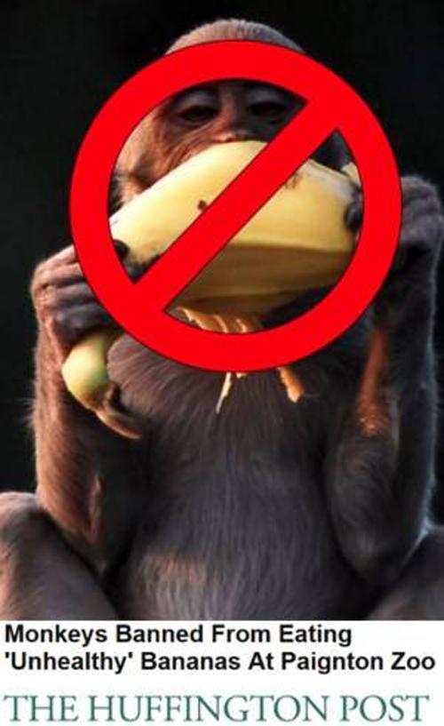 Zoológico na Inglaterra proíbe que os seus macacos comam as bananas