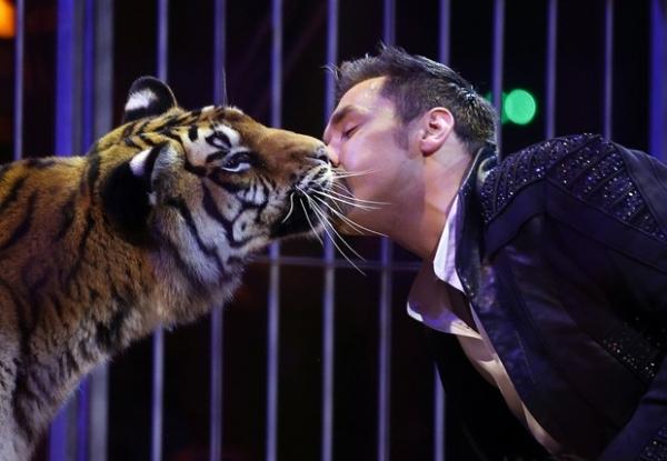 Artistas de circo deitam sob elefante e ganham até beijo de tigre em festival