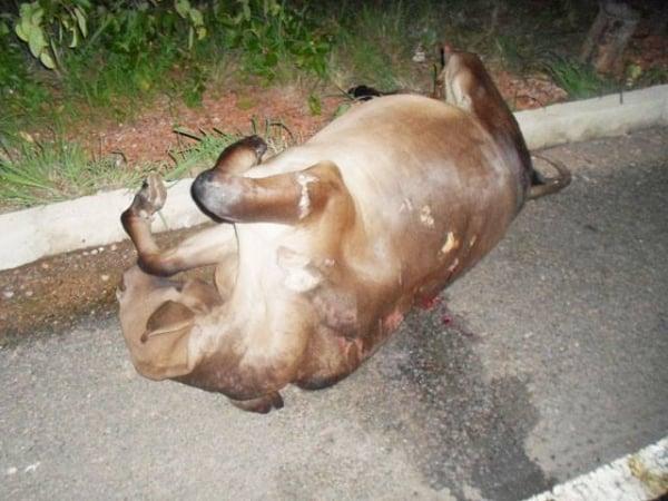 Grave acidente deixa veiculo destruído durante colisão com animal na PI-113