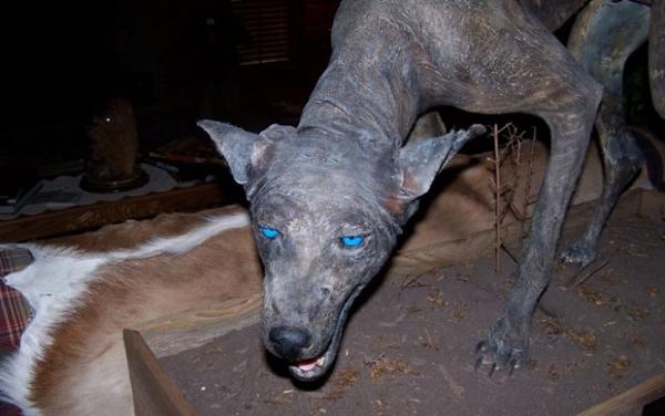 Suposto chupa-cabra aterroriza regiões na Rússia