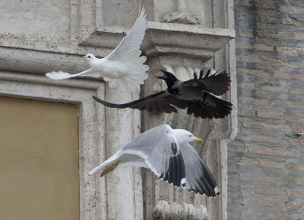 Pomba libertada por Papa Francisco e duas crianças é atacada por gaivota no Vaticano