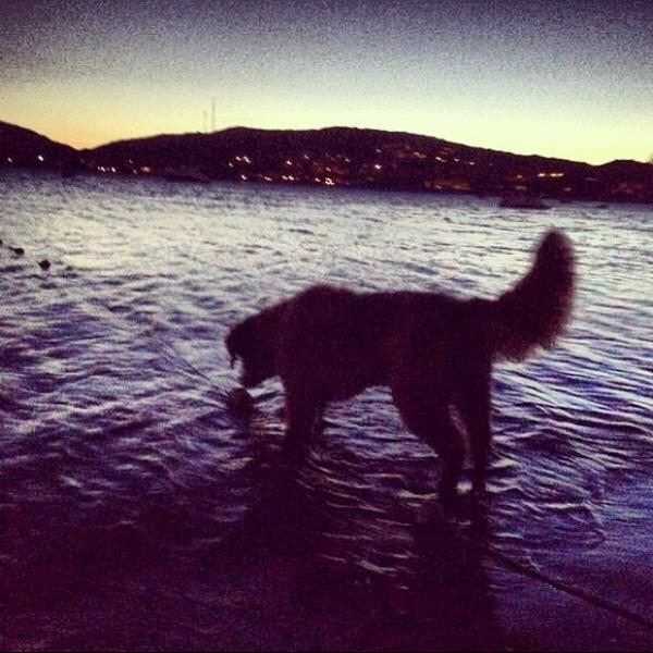 Bruno Gagliasso passa fim de semana remando com o cachorro