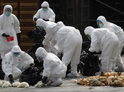Hong Kong abate 20 mil frangos para evitar propaga鈬o de gripe avi疵ia