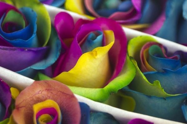 Floricultura bizarra no Equador vende rosas fluorescentes e