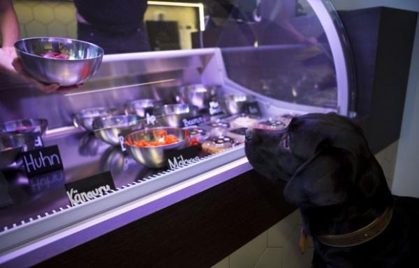 Alemanha conta com restaurante exclusivo para animais de estimação
