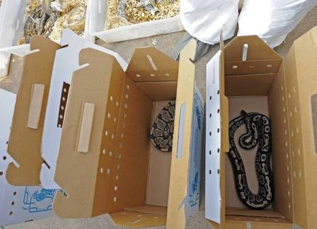 Centenas de cobras mortas são encontradas em casa de professor primário, na Califórnia