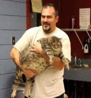 Gordo demais, gato n縊 cabe em jaula de abrigo de animais nos EUA
