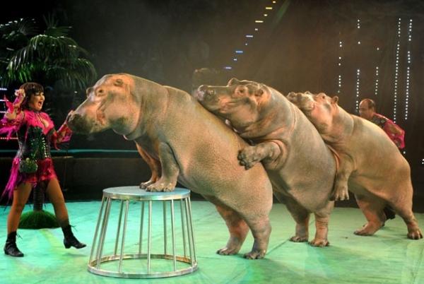 Hipopótamos fazem