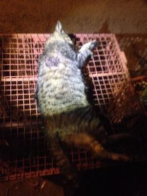 Homem  preso ap matar gato com espingarda por briga com vizinho
