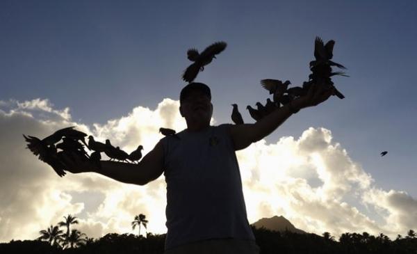 Homem alimenta dezenas de pombos