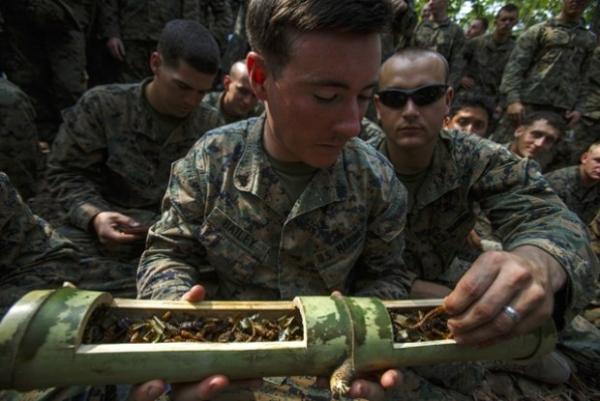 Soldados bebem sangue de cobra durante treinamento de sobrevivência