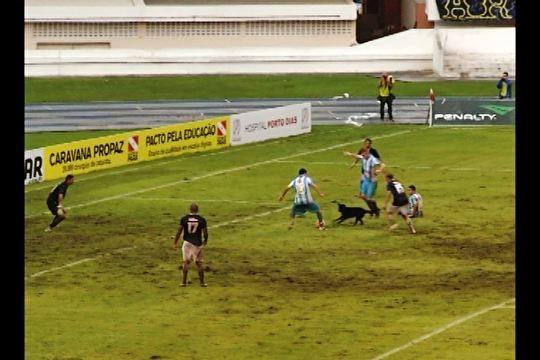 Cachorro invade gramado e