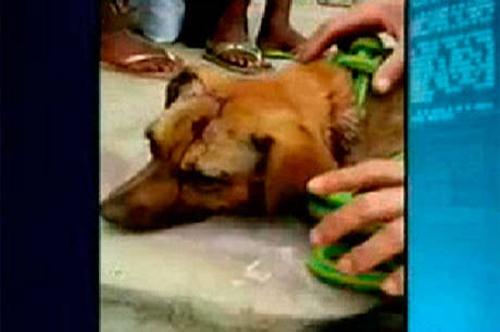 Cadela é agredida a pauladas pelos próprios donos no bairro de Cajazeiras