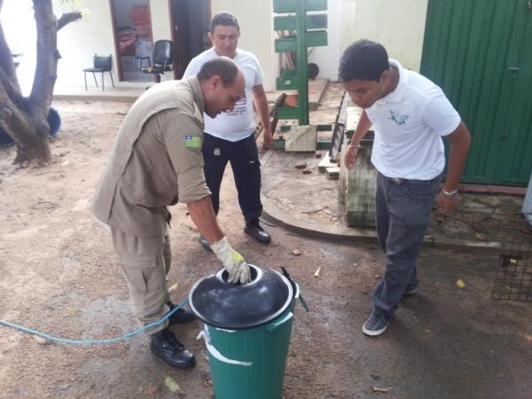 Cobra de seis metros é encontrada por populares no centro de cidade no interior do Piauí