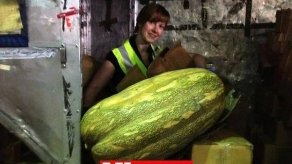 Abóbora de mais de um metro é apreendida na Grã-Bretanha ao ser contrabandeada