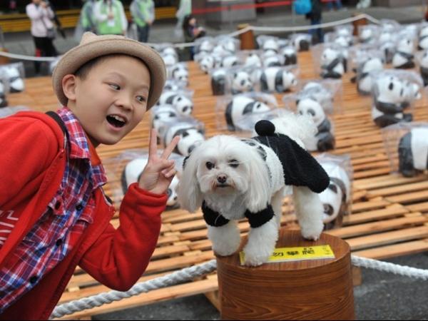 Cachorro é fantasiado de urso panda em exposição de Taiwan