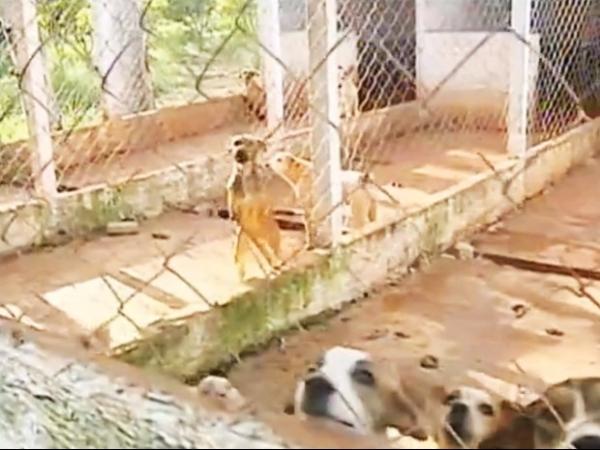 Abandono, canil deixa cães sem comida e higiene precária