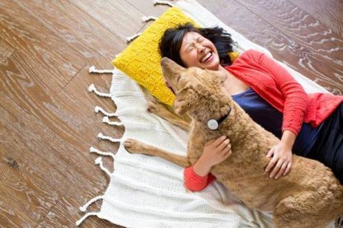 Coleira inteligente mostra como está a saúde do seu cachorro
