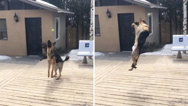 Cão leva