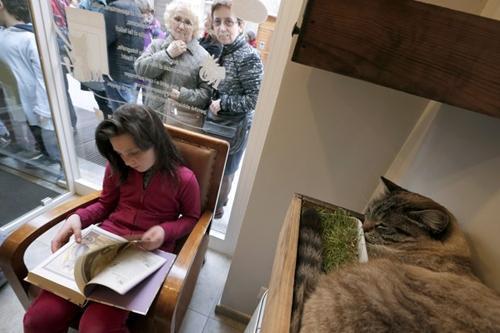 Café para gatos e seus donos faz cães