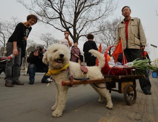 C縊 que traz compras do dono em carro軋 faz sucesso na China