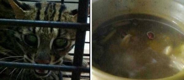 Chinesa faz sopa com seu gato, publica foto e choca internautas