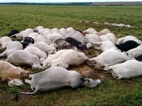 Raio mata 51 cabeças de gado em fazenda no TO; prejuízo é superior a R$ 60 mil