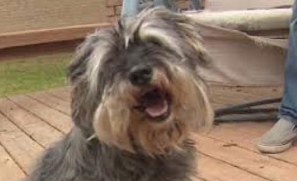 Cão roubado havia cinco anos é devolvido para dono nos EUA