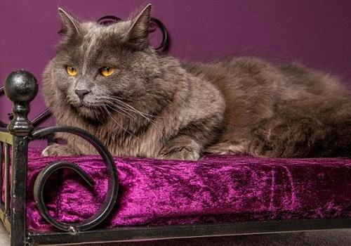 Hotel 5 estrelas oferece serviços de luxo para gatos