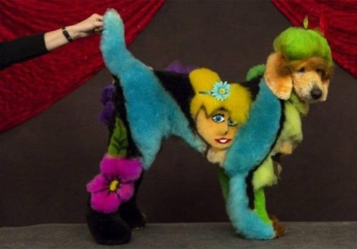 Exposição de cachorros coloridos chama a atenção nos EUA