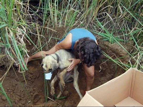 Cachorro é resgatado após ser enterrado vivo pelo próprio dono