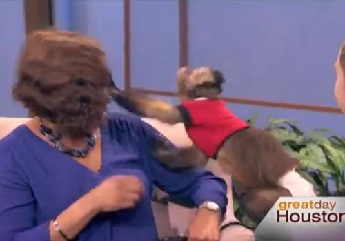 Macaco fica irritado e acerta tapa no rosto de apresentadora nos EUA