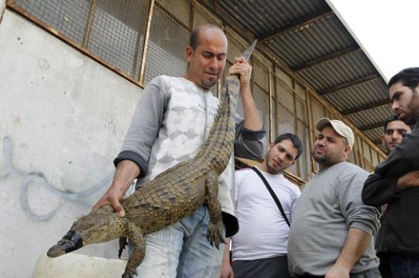Pescador se surpreende ao capturar crocodilo em rio no Líbano