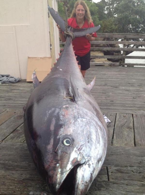Ap 4 horas, neozelandesa fisga atum de 411,6 quilos e bate recorde