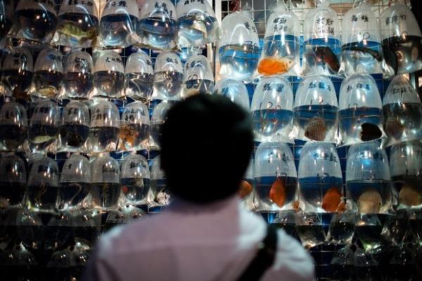 Loja chinesa vende peixes que são exibidos em saquinhos plásticos