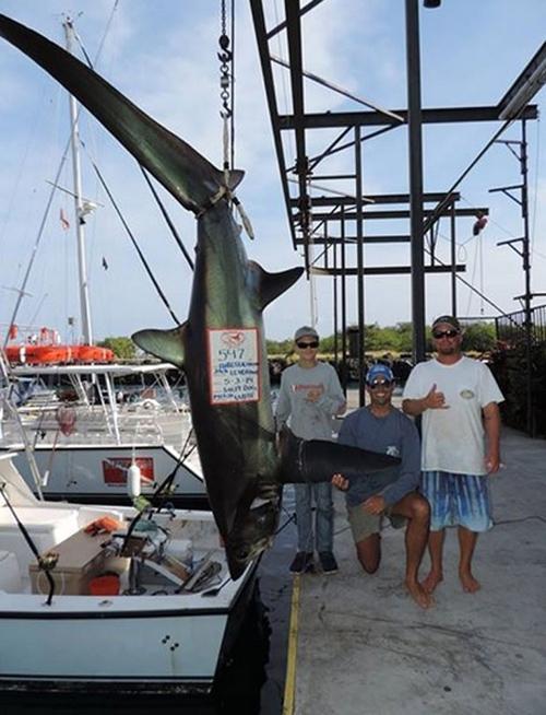 Adolescente de 15 anos fisga tubarão-raposa de 248 kg e deve bater recorde