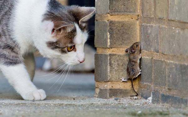 Rato é fotografado em