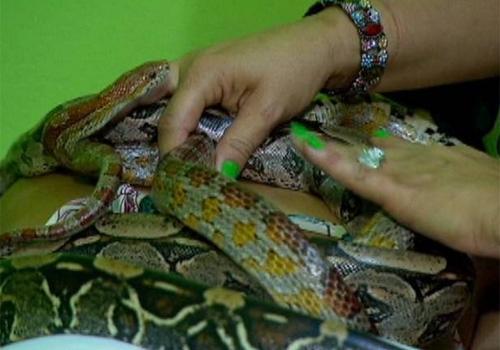 Massagem corporal com cobras é nova opção para cariocas estressados