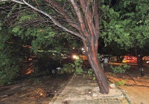 Árvore cai em cima de carro após chuva em Parnaíba