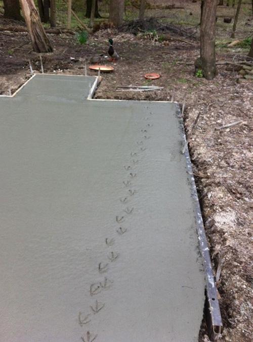 Pato deixa pegadas em piso de cimento fresco e faz sucesso na web