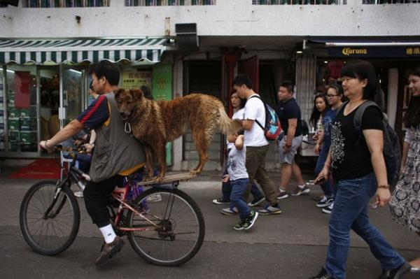 C縊  flagrado passeando na garupa de bicicleta na China