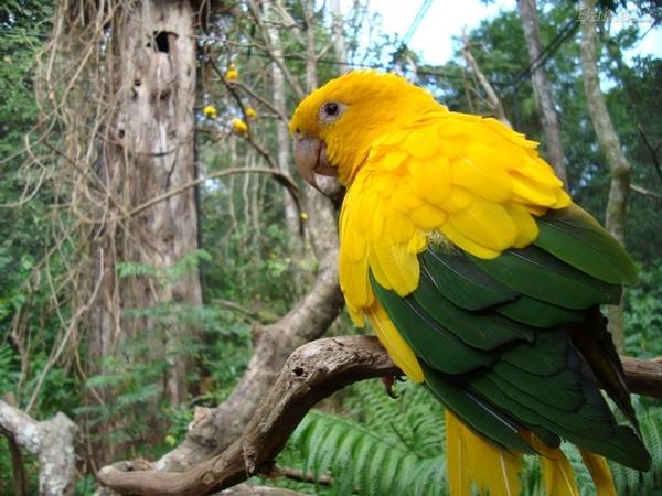 Conheça 6 espécies de animais prontos para torcerem para o Brasil na Copa do Mundo