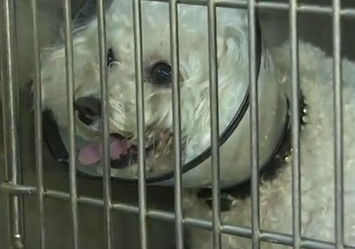 Cadela cai 14 andares por cano e sofre apenas arranhões nos EUA
