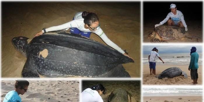 16 de Junho Dia Internacional da Tartaruga Marinha