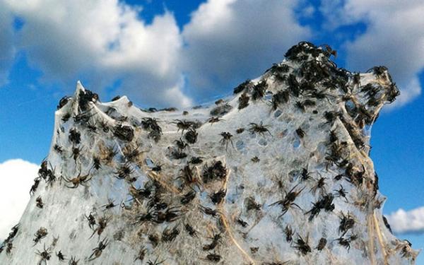Arte da natureza: veja o impressionante trabalho feito por aranhas na Austrália