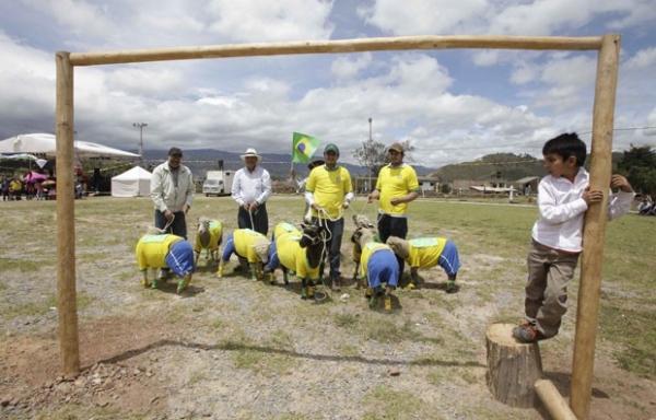 Com uniformes de Brasil e Colômbia, ovelhas disputam jogo de futebol