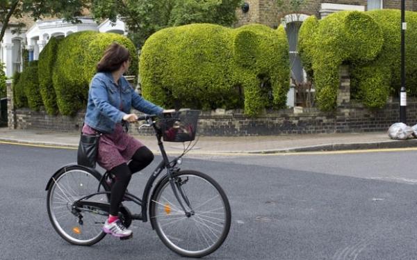 Cerca viva em formato de elefantes chama a atenção na Inglaterra